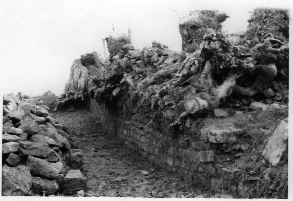 Uncovering Hadrian's Wall at Willowford Farm B&B